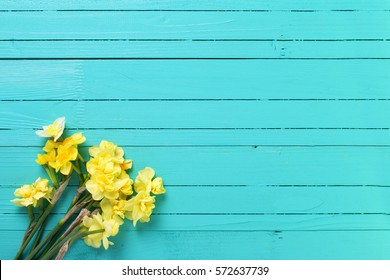 Yellow narcissus or daffodil flowers on aquamarine  wooden background. Selective focus. Place for text.