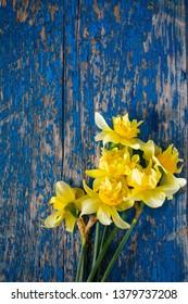 Yellow narcissus (Narcissus poeticus)