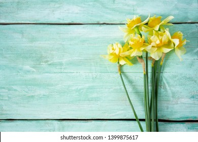 Yellow narcissus (Narcissus poeticus) on turquoise surfae