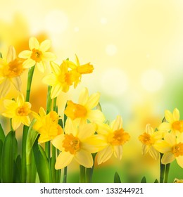 Yellow narcissuses against the blue sky