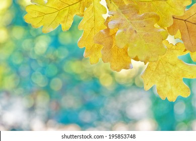 Yellow oak leaves on a background of multicolored trees