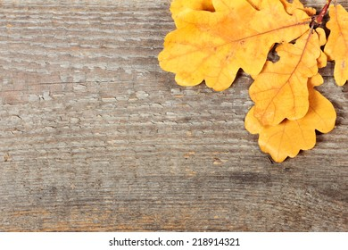 Yellow oak leaves on old wooden background