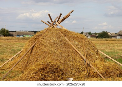 Yellow Oats hay bale on the European rural harvested field at Sunny summer day on blue sky background, haystack forage preperation on the Farm
