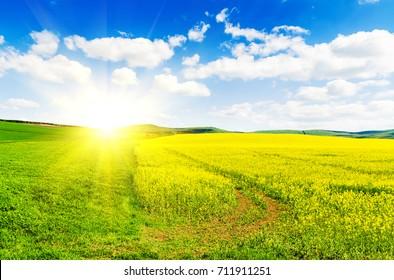 Yellow oilseed rape field under the blue sky with sun