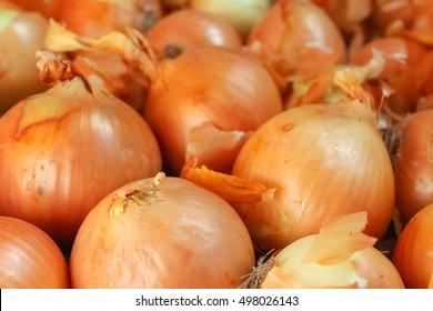 yellow onions close up