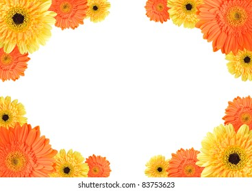 Yellow and orange daisy-gerbera flowers create a frame on white background