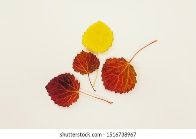 Yellow and orange fall leaves