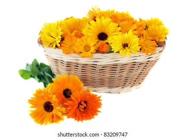 The yellow and orange marigold in a basket isolated on a white background.