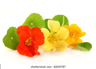 yellow and orange nasturtiums in front of white background
