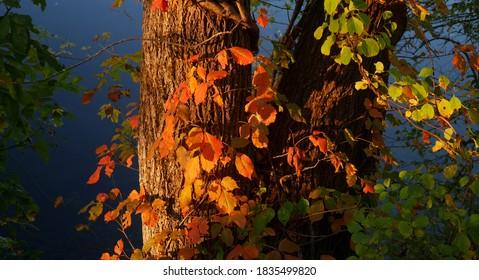 Yellow Orange Red autumn leaves
