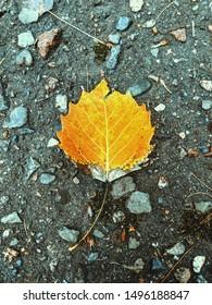 Yellow and orange single leaf