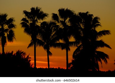 yellow and orange sun setting over palm trees and water