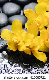 Yellow orchid and black stones background-wet background