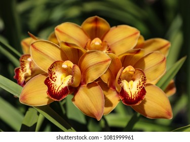 Yellow Orchid Bloom