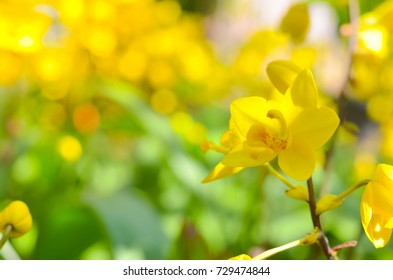 Yellow Orchid flower background, Elemnt of design,select focus