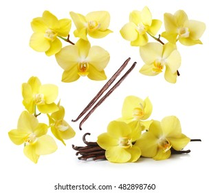 Yellow orchid flowers and vanilla pods isolated on white background
