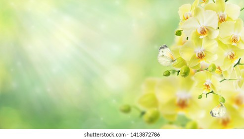 Yellow orchid flowers and white butterflies are on blurred abstract natural yellow-green background with beautiful bokeh