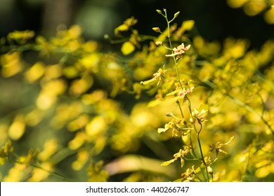 yellow orchid from orchid garden on nature background