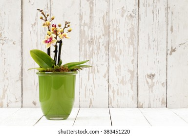 yellow orchid in glass pot, on white wooden planks