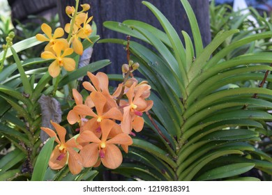 Yellow orchid with green background.