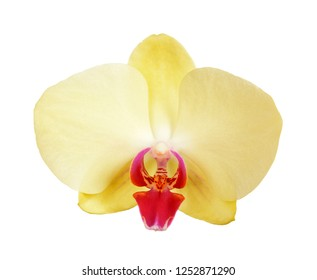 Yellow orchid isolated on white