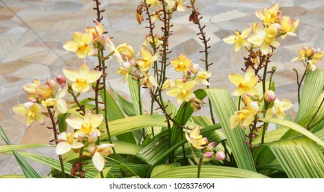 Yellow orchid plant