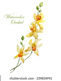 yellow orchid, watercolor, flowers,