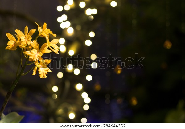Yellow Orchids with a Bokeh Background
