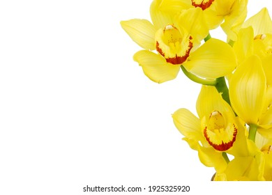Yellow orchids on a white isolated background