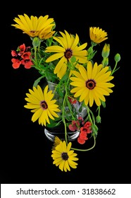 Yellow Osteospermum (Asteroideae) floral arrangement on black background