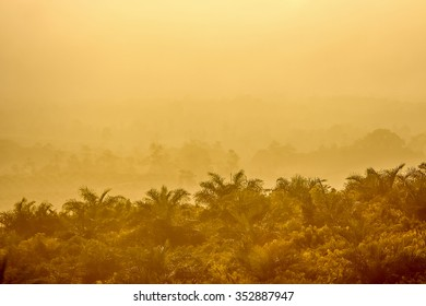 Yellow palm oil field and sunset for background