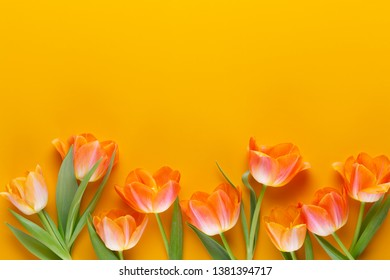 Yellow pastels color tulips on the yellow background. Retro vintage style. Still life, flat lay art.