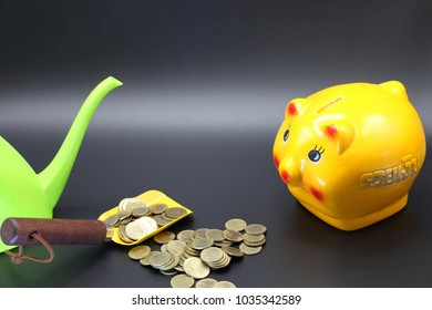 Yellow Piggy Bank with stack of Golden coin,green water pot on black floor and in spade on dark background,investment concept