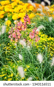 Yellow pink flower garden background in summer. Flowerbed with snapdragon, echinacea, marigold, tagetes and grass. Gardening and beautiful landscape, selective focus