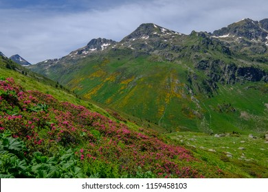 Yellow and pink flowers on the slope of the mountain in the french Pyrenees near Aston in Ariege