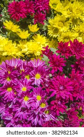 yellow, pink, red, purple, and white flower in garden