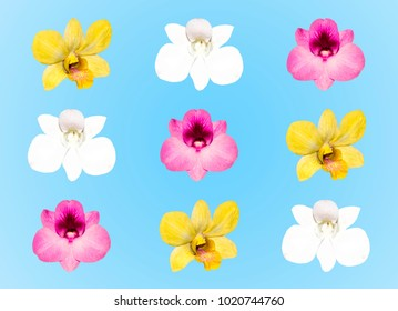 Yellow, pink and white orchid flowers isolated on blue background