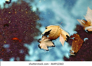 Yellow plane tree leaves in the puddle with autumn blue sky reflection. Great season rainy texture with fall mood. Nature outdoor september background.