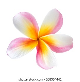 Yellow Plumeria (frangipani) on white background