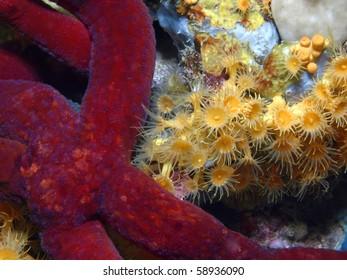 yellow polyp