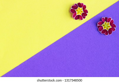 yellow and purple background with two primrose blossoms