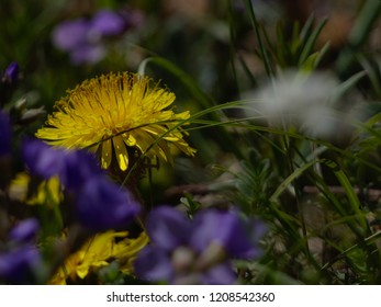 yellow and purple flower on green background