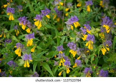 yellow and purple flowers - a dark green background