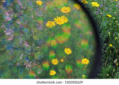 Yellow and purple wild flowers through lens filter with rainbow colors effect.