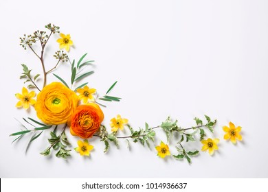 Yellow ranunculus on white background. Flat lay.