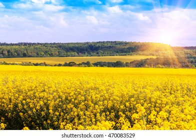 yellow rape field under sunlight and blue sky