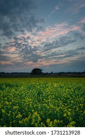 Yellow rapeseed field, horizon and clouds on sky after sunset, summer evening view
