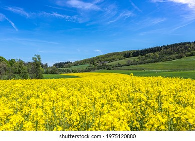 Yellow rapeseed field leading to the old stone farm on the background. France 2021