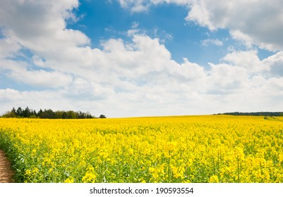 yellow rapeseed field, road, forest and blue sky with white clouds