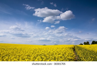 Yellow rapeseed field in Slovakia